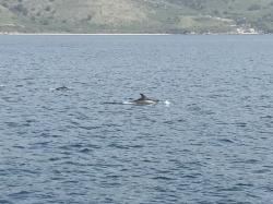 Corfou dauphins